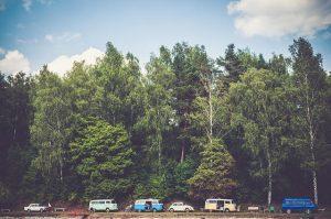 trees-1246045_640